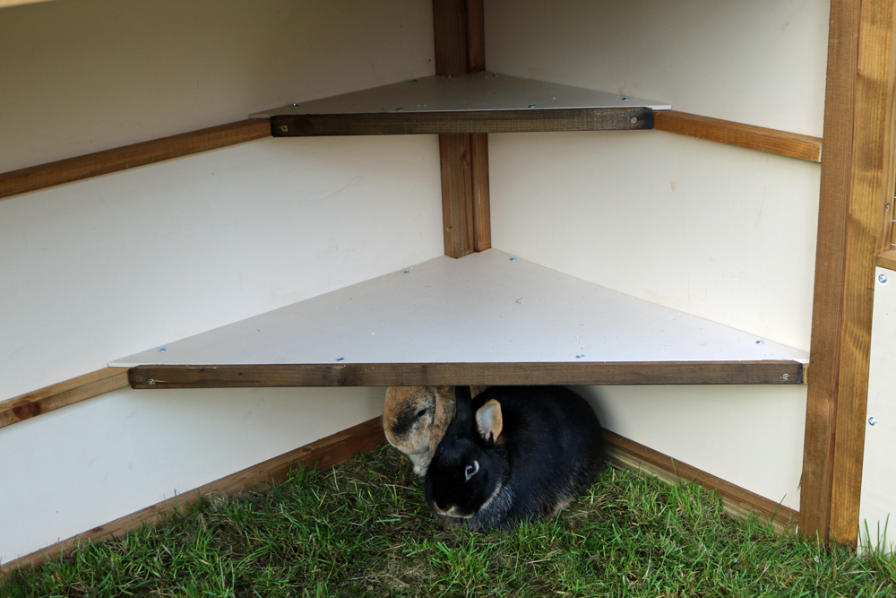 Rabbits in Sheltered Enclosure