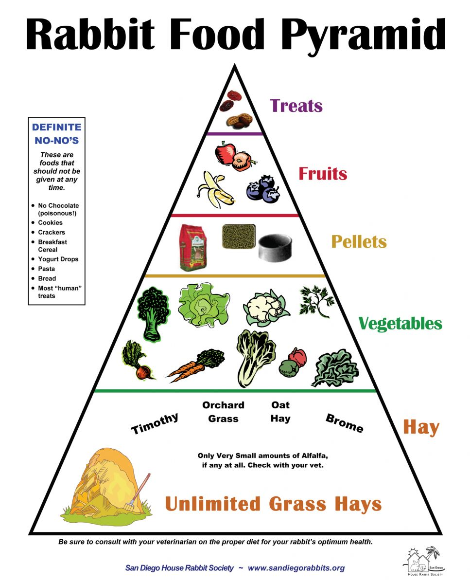 Rabbit-Food-Pyramid.jpg