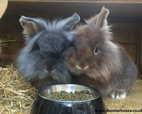 What Dried Food Can Rabbits Eat