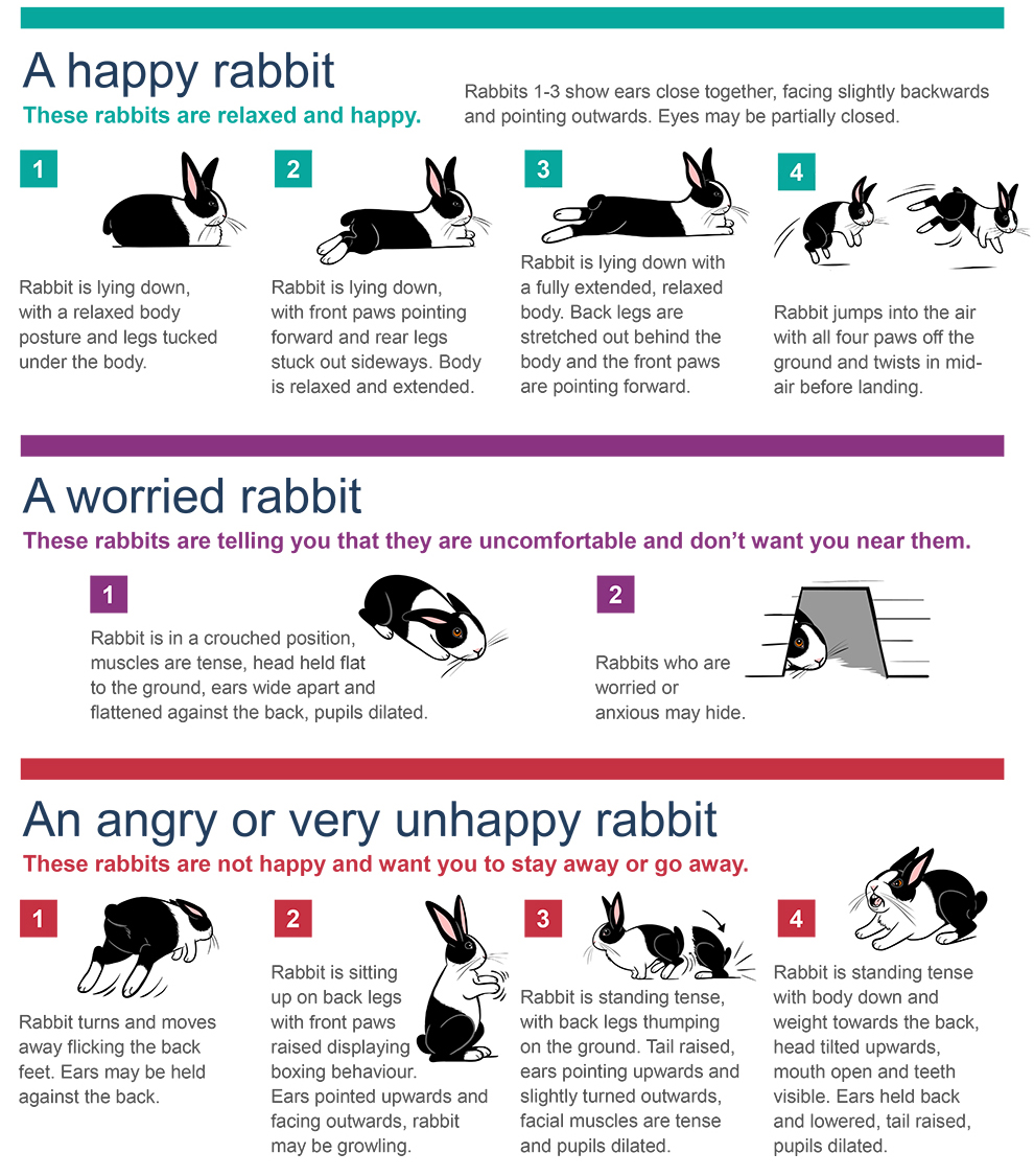 Understanding Rabbit Behaviour