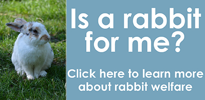 Rabbit Welfare